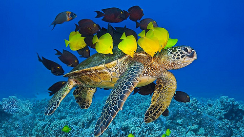 5 SEA TURTLE SUCCESS STORIES OF THE 2010'S