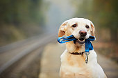 COLLARS , LEASHES , HARNESS